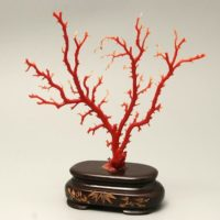 珊瑚 原木 置物